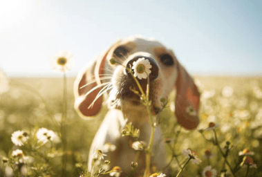 dog in a field sniffing a wildflower