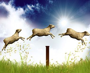 three sheep jumping over a fence