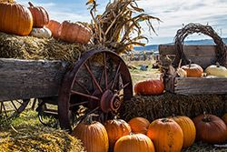 wagon in a field with pumpkins